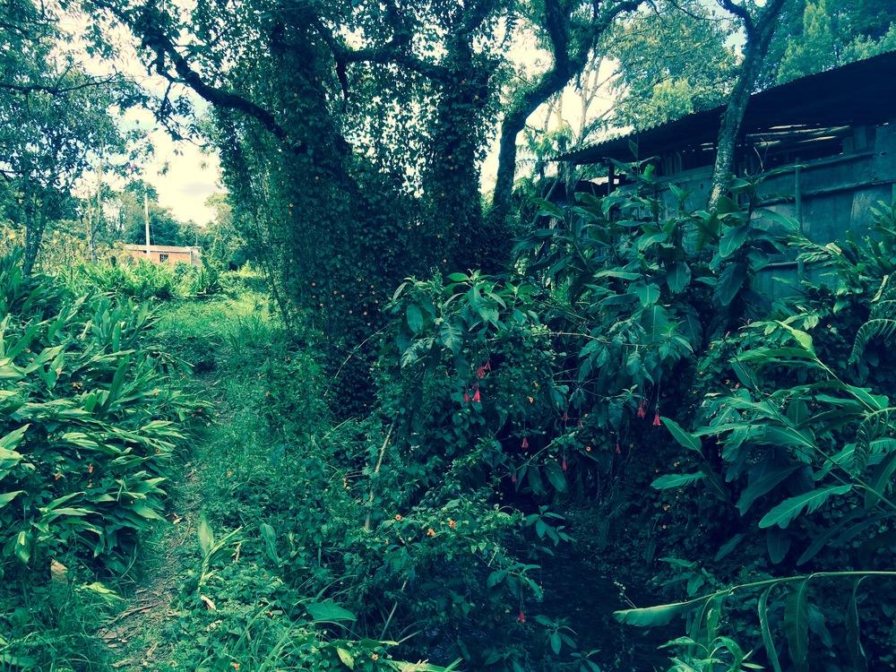 A Lush Backyard