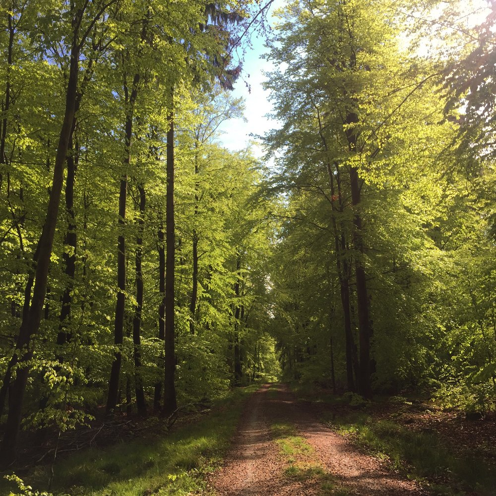 Hiking in Germany.
