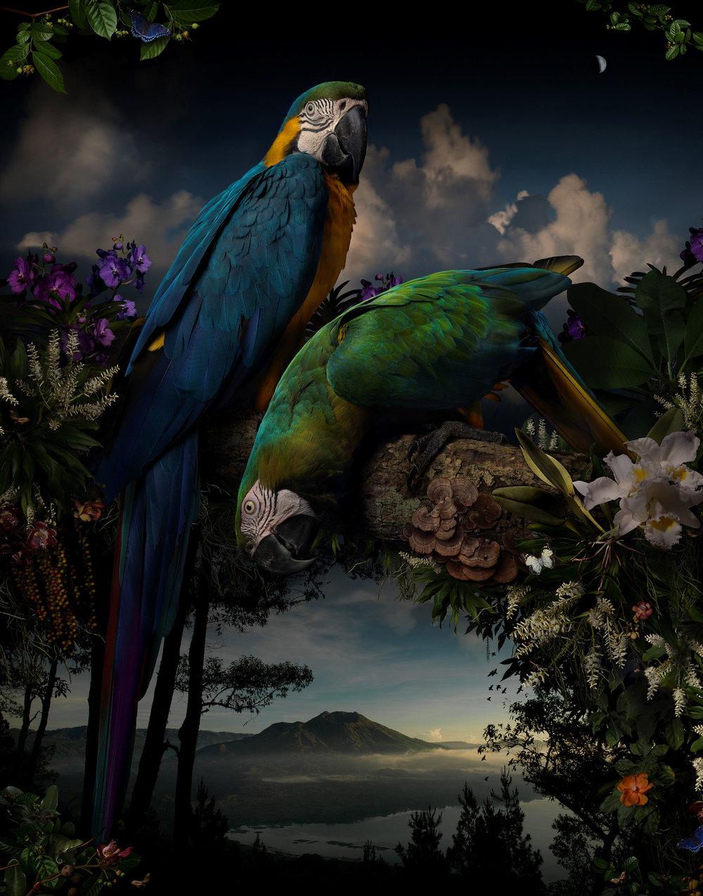 Joseph McGlennon, Florilegium #1 2014 from the series Florileigum, pigment ink-jet print, 127 x 100cm