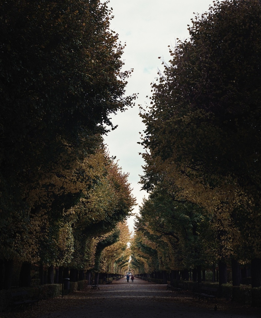 """Allee"" Archival pigment print (Ed. of 5) Retail price: $3,500"