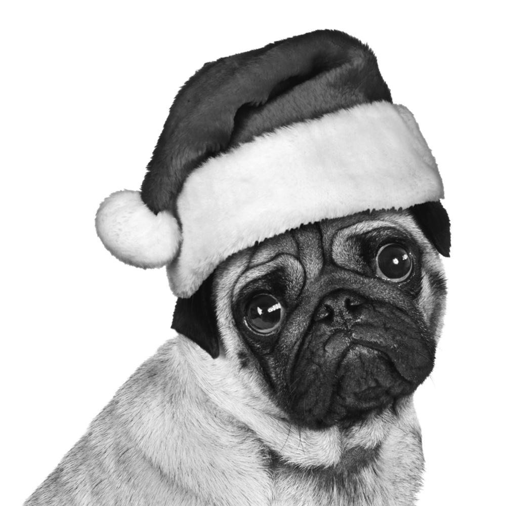 amx4-festive-pug1.jpg
