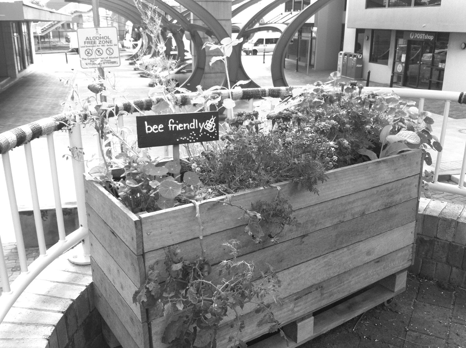 Victory-Garden-planter-box-The-Mall-June-2014-002_grey