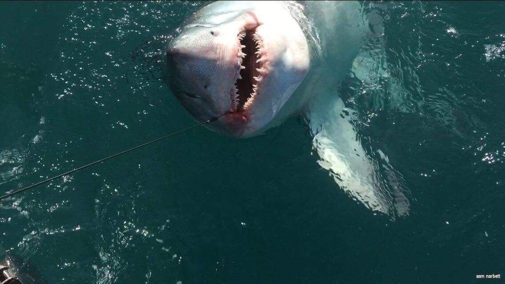 sharks sun