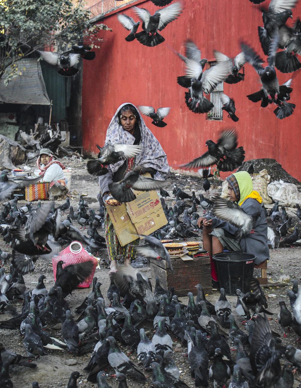 pigeon+lady.jpg