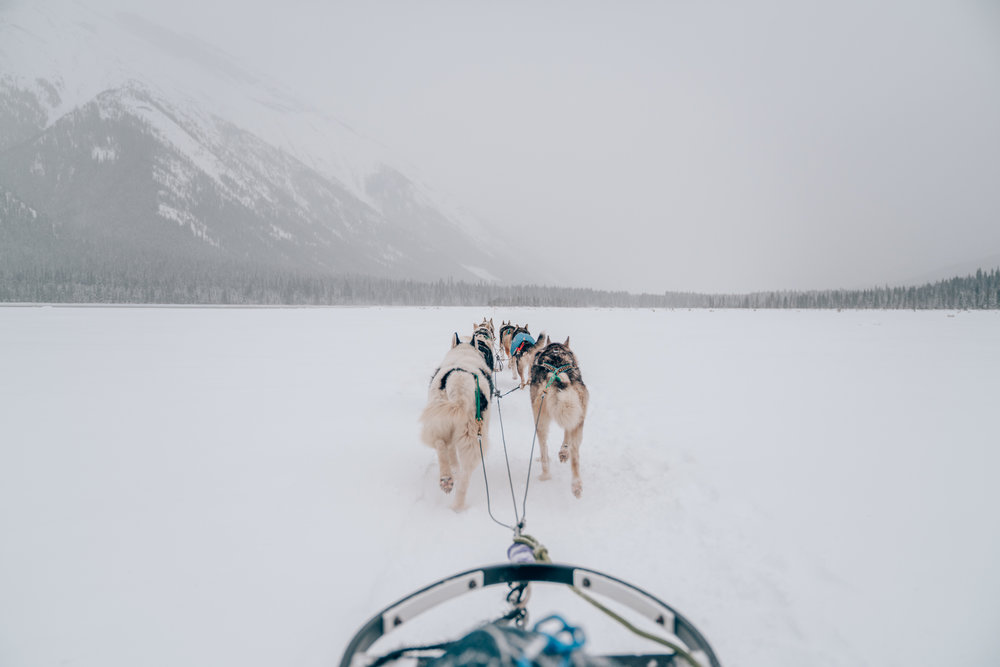 Dog Sledding Tour in Banff, Alberta, Canada