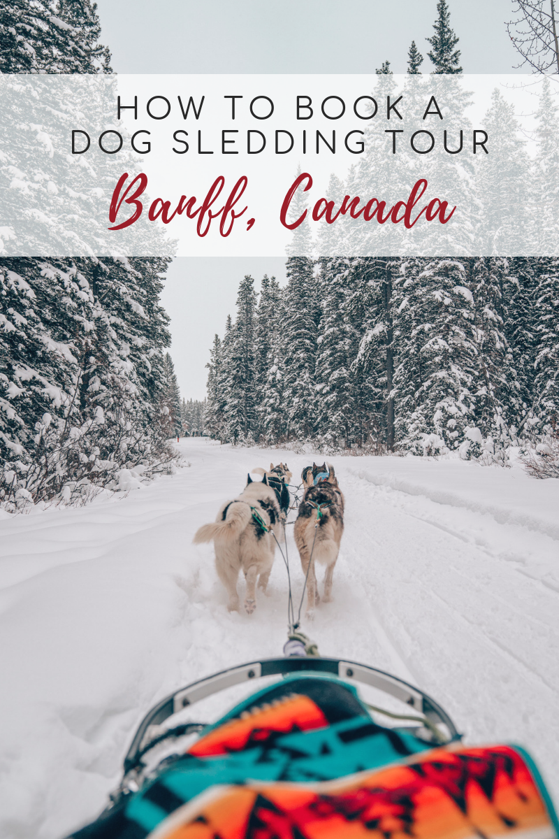 How To Book a Dog Sledding Tour in Banff, Canmore, Alberta, Canada