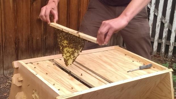 OPEN SOURCE BEE HIVES