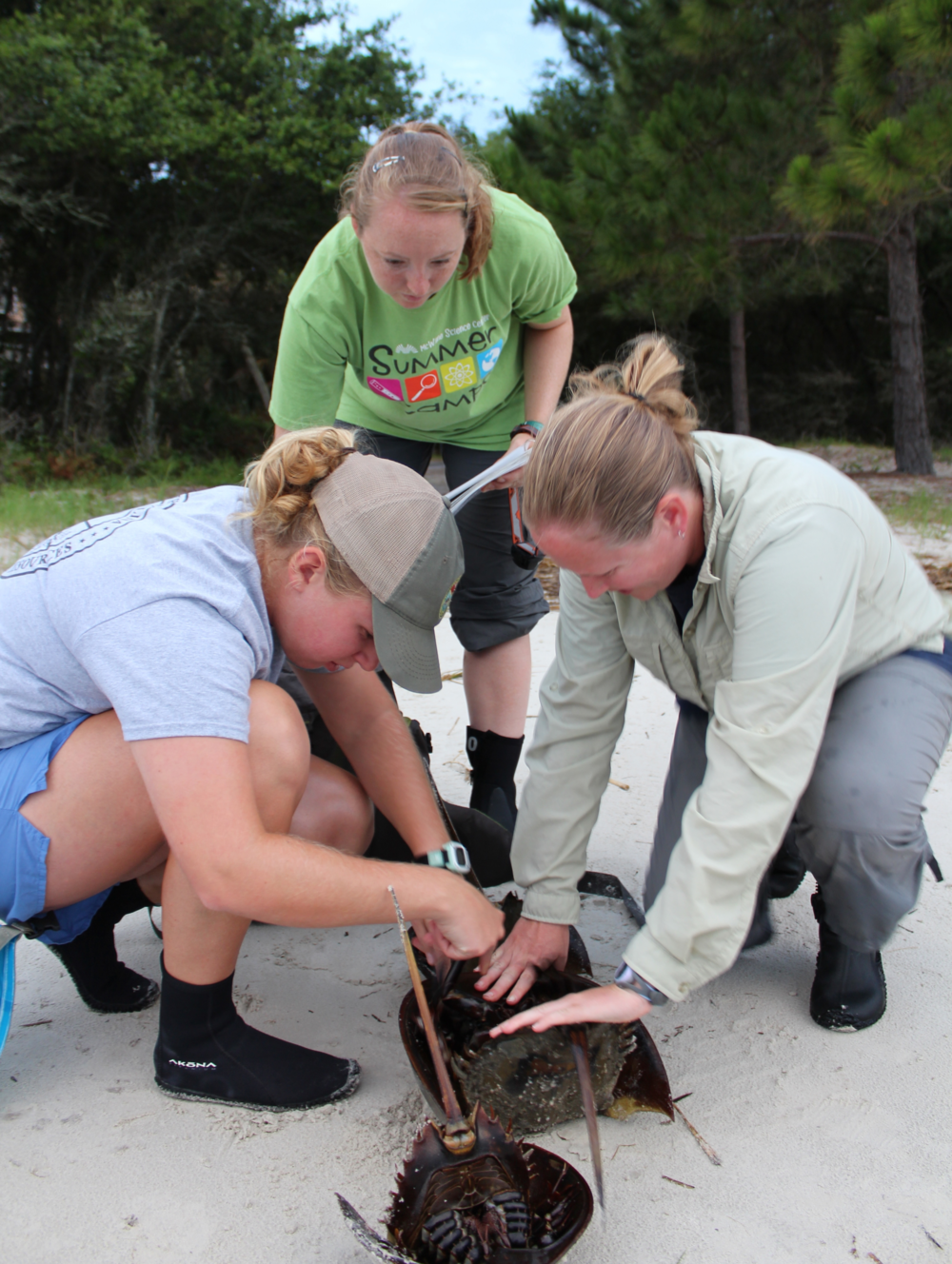 SCDNR staff review horseshoe crab anatomy before a survey. (Photo: E. Weeks/SCDNR)