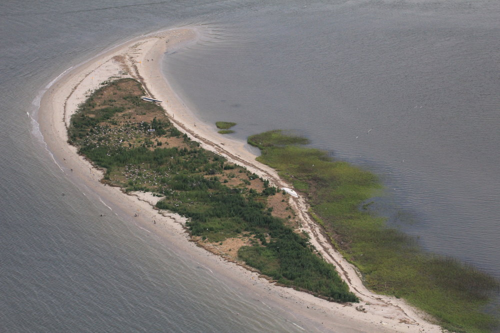 Just two years later, in 2015, the vegetation on Crab Bank Seabird Sanctuary has grown in some. Barrier islands are constantly changing, making it important that seabirds along the South Carolina coast have enough protected beaches  to weather these fluctuations. (Photo: Christy Hand)