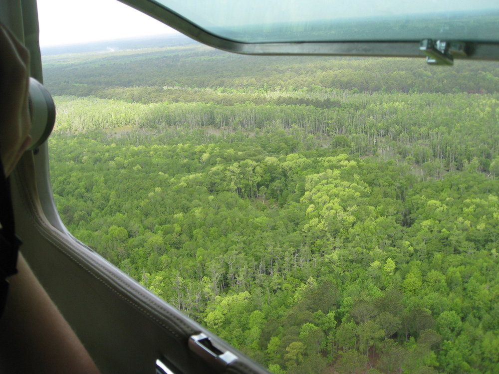 Aerial survey photos are taken through the window of one of SCDNR's small planes, which allow biologists to survey over 20 different colonies a day without stressing the birds. (Photo: Lisa Smith)