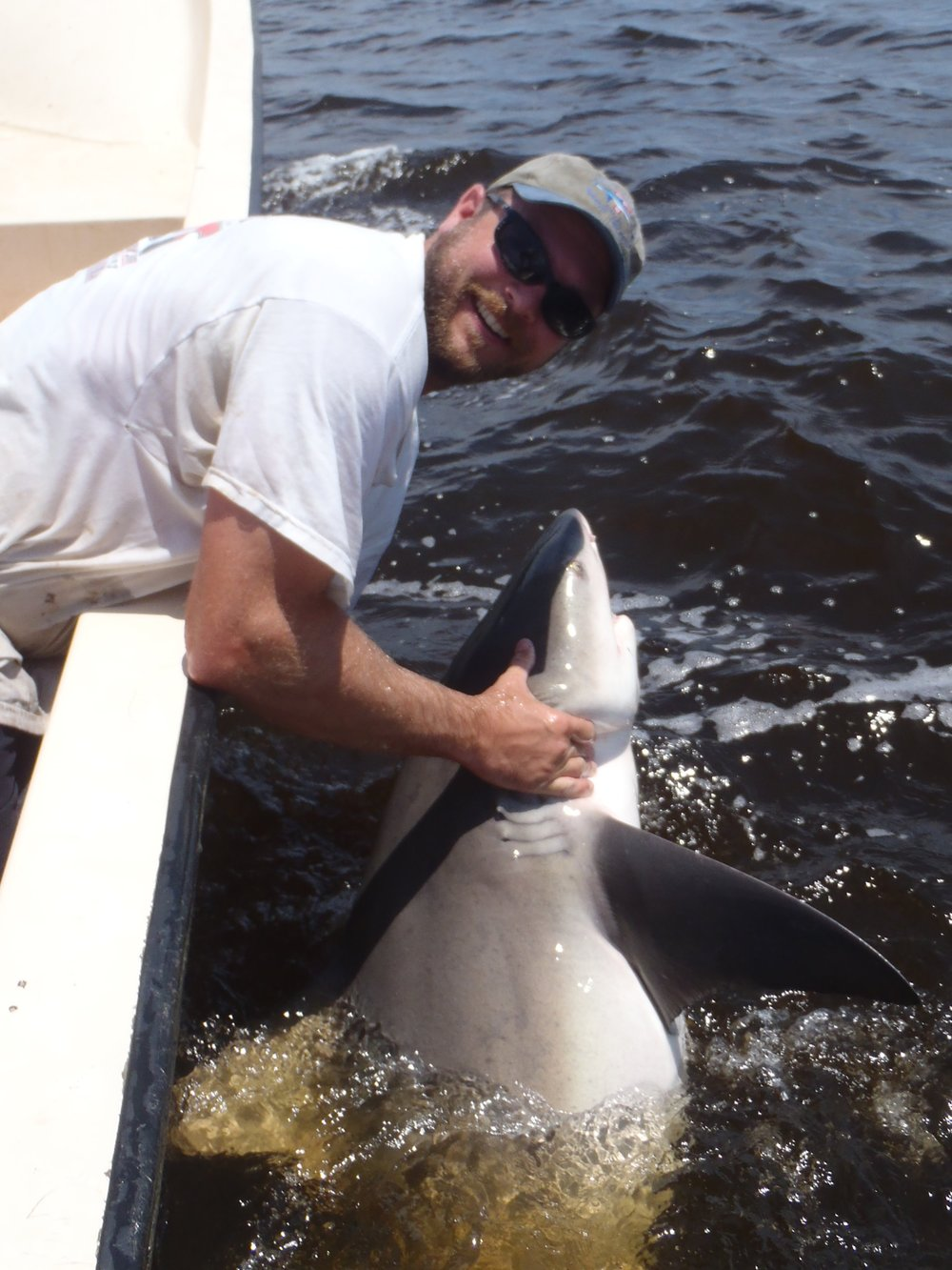SCDNR biologist Bryan Frazier releasing a bull shark tagged during a research survey in 2013. (Photo: Ashley Shaw)