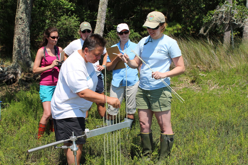 SCDNR scientist Katie Luciano (right) demonstrates how to measure marsh erosion or accretion to workshop participants, who then learn how to teach this in the classroom. (Photo: E. Weeks/SCDNR)