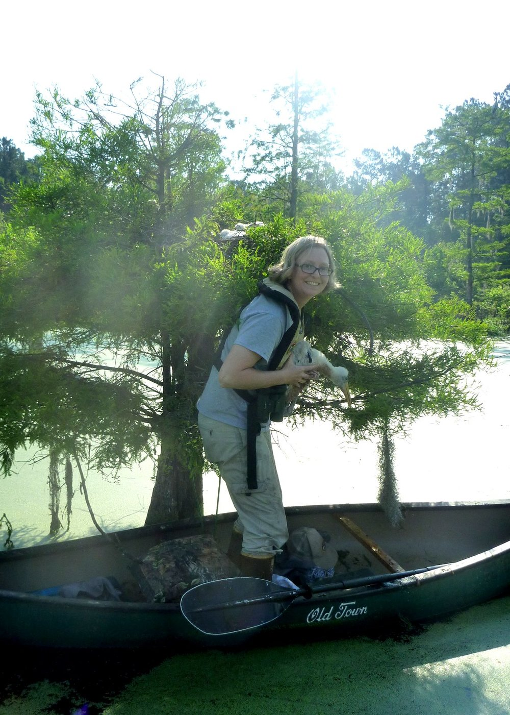SCDNR biologist Christy Hand gently returns a wood stork chick to its nest after measuring and banding it. (Photo: Alix Pedraza/SCDNR)