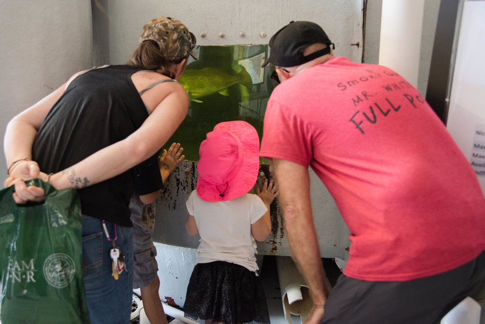 Visitors got to come face-to-face with several tanks of large red drum, spotted seatrout, and cobia, all of which are studied and bred at SCDNR to help boost the local, wild populations of these fish. (Photo: Mary Ellen Williams)