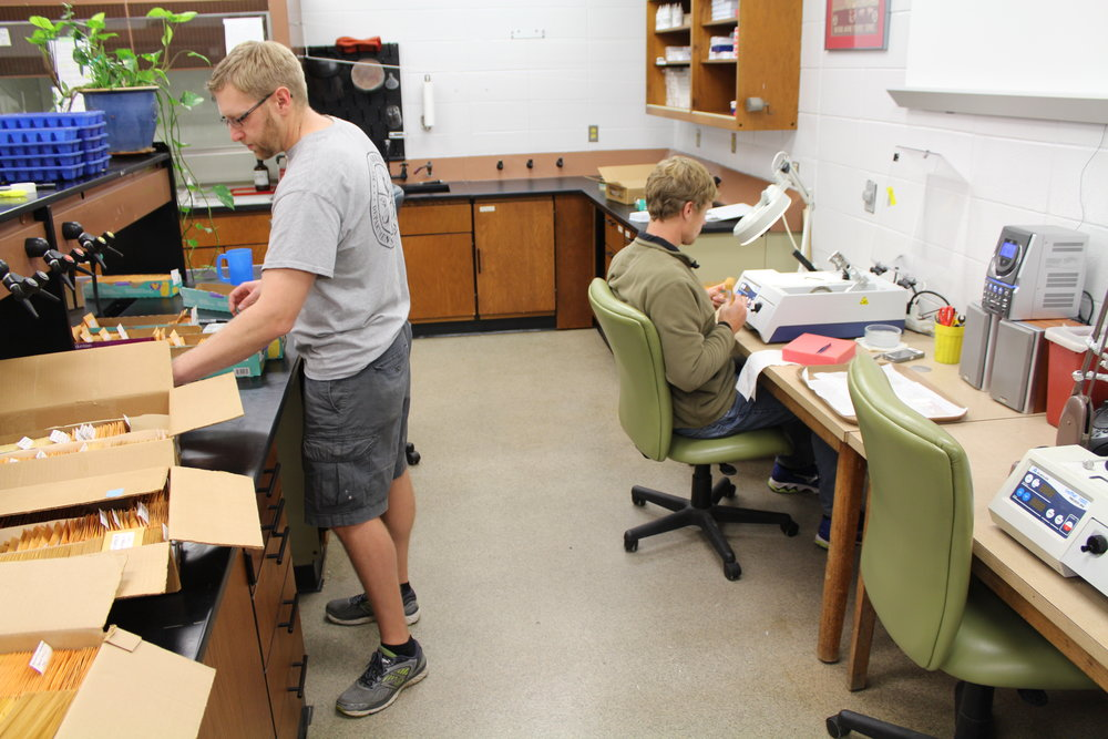 Joe Evans and Adam Lytton organize and section fish ear bone (or otolith) samples in the Marine Resources Monitoring, Assessment, and Prediction (MARMAP) lab.(Photo: E. Weeks/SCDNR)