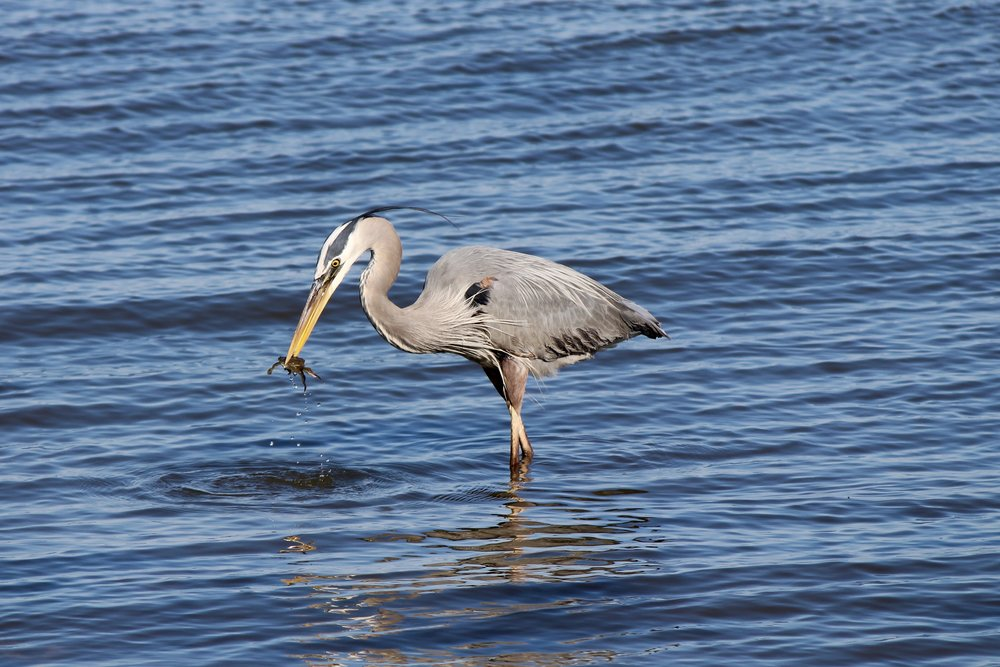 Photo: E. Weeks/SCDNR