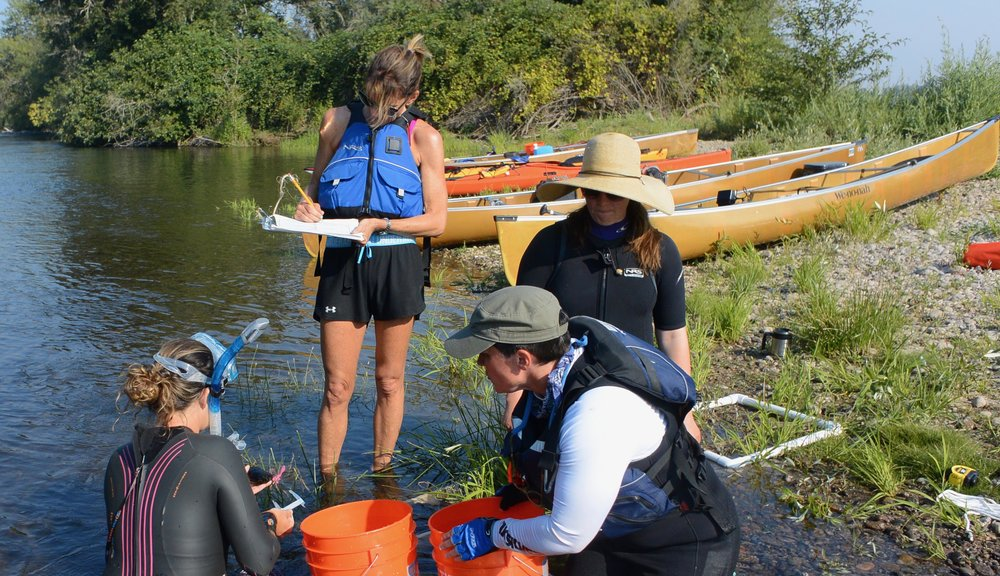 Team measures and catalogs mussels - Summer 2017 .