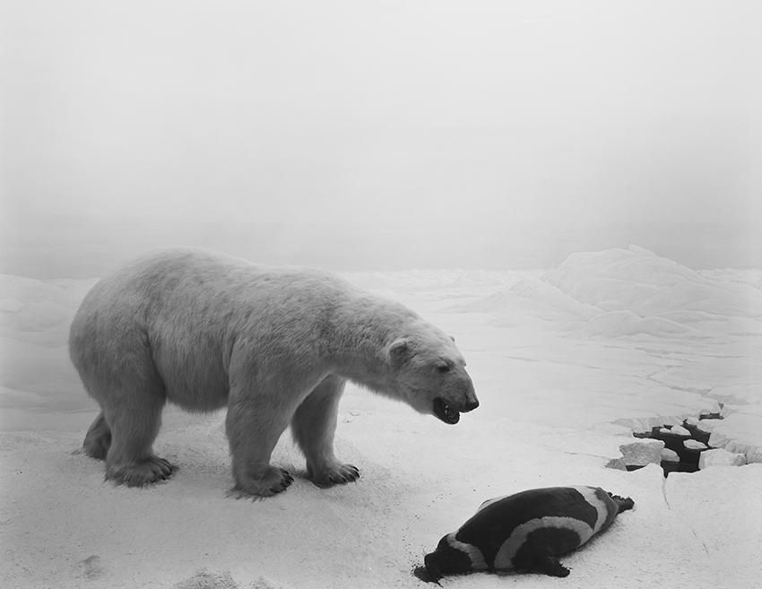 "Hiroshi Sugimoto, ""Polar Bear"" (1976)"