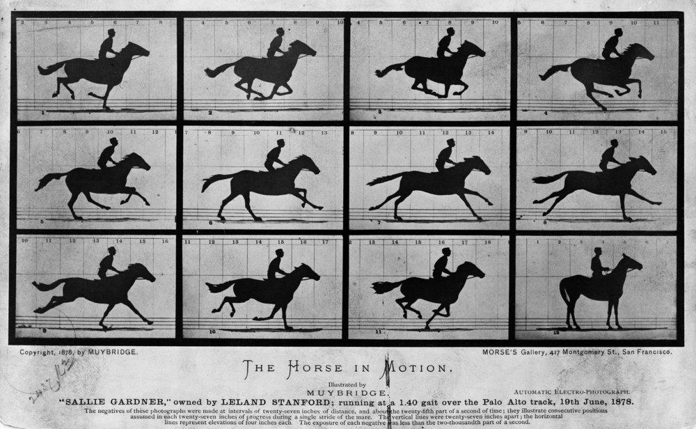 """Eadweard Muybridge, """"The Horse in Motion"""" (1878)"""