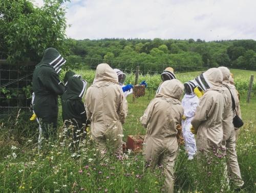 Bee-keeping at Albury Vineyard. Source: Albury Organic Vineyard