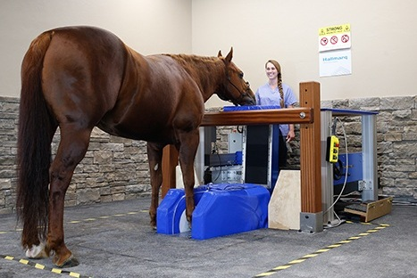 standing mri - Safer and more affordable than a traditional equine MRI—resulting in an immediate, accurate diagnosis in more than 90% of cases.