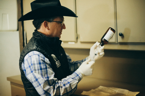 Equine Pharmacy - From dewormer, antibiotics and pain management to first aid supplies, joint maintenance and ulcer supplements, we can provide all the treatment solutions and tools you need to keep your equine athlete on track and healthy.