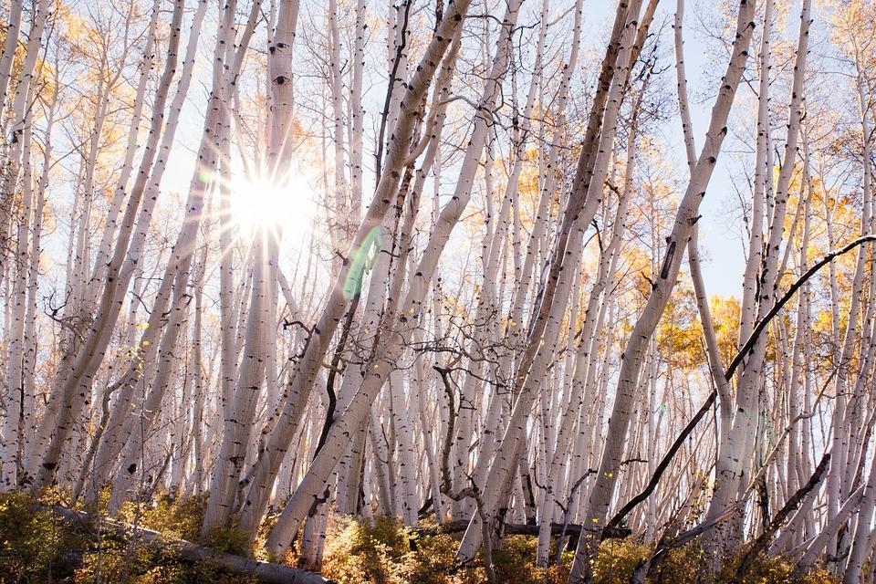 fall-2821714_960_720.jpg