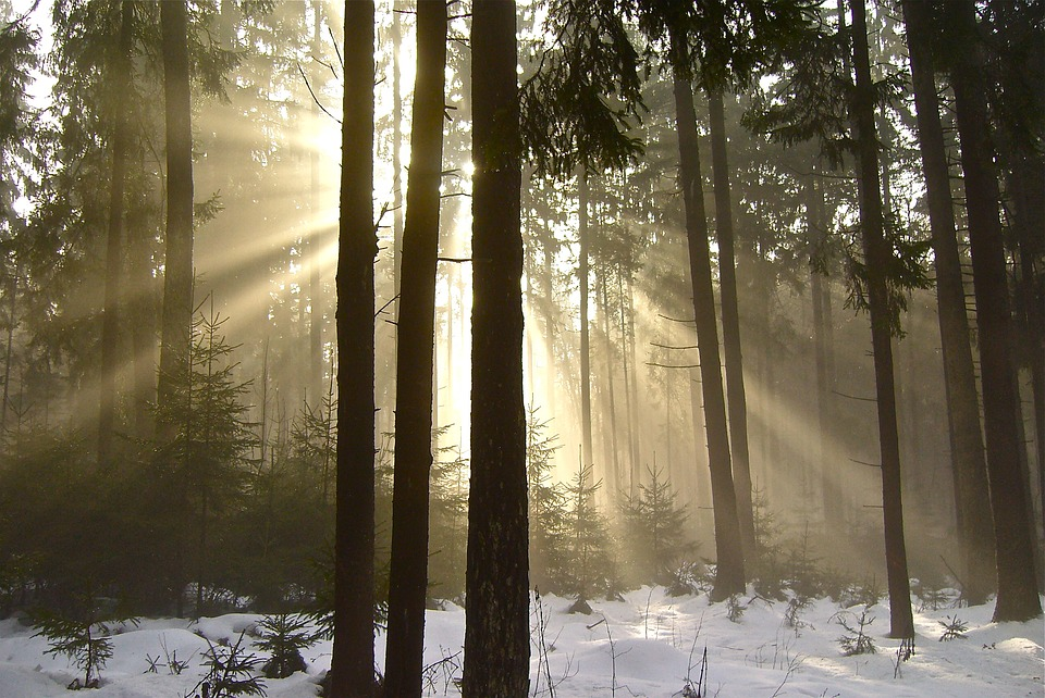 forest-2167751_960_720.jpg