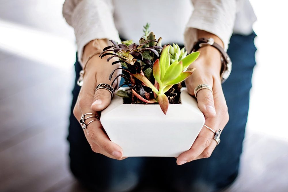 succulents-hands-woman-female-442404.jpeg