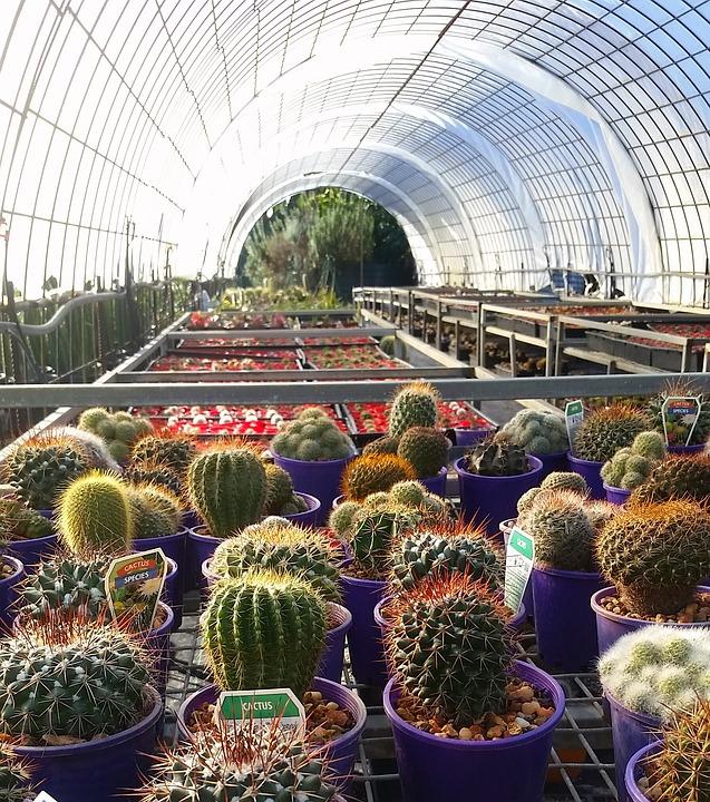 cactus-2545817_960_720.jpg