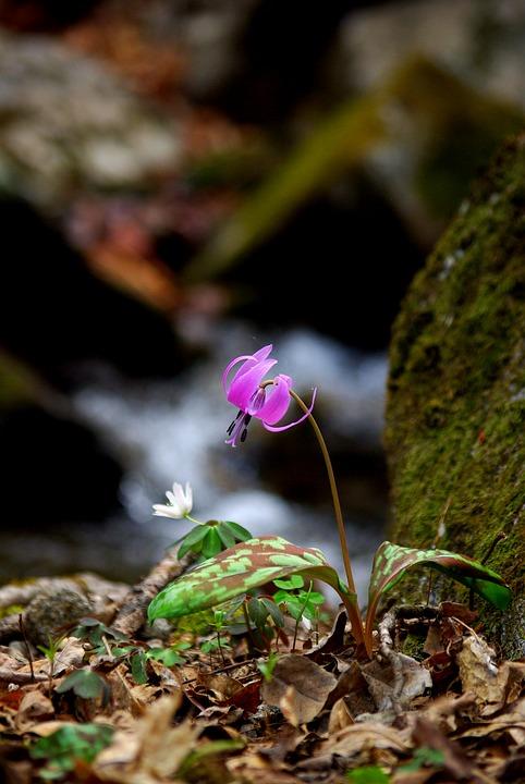 nature-3275522_960_720.jpg