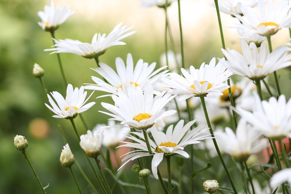 flowers-1606041_960_720.jpg