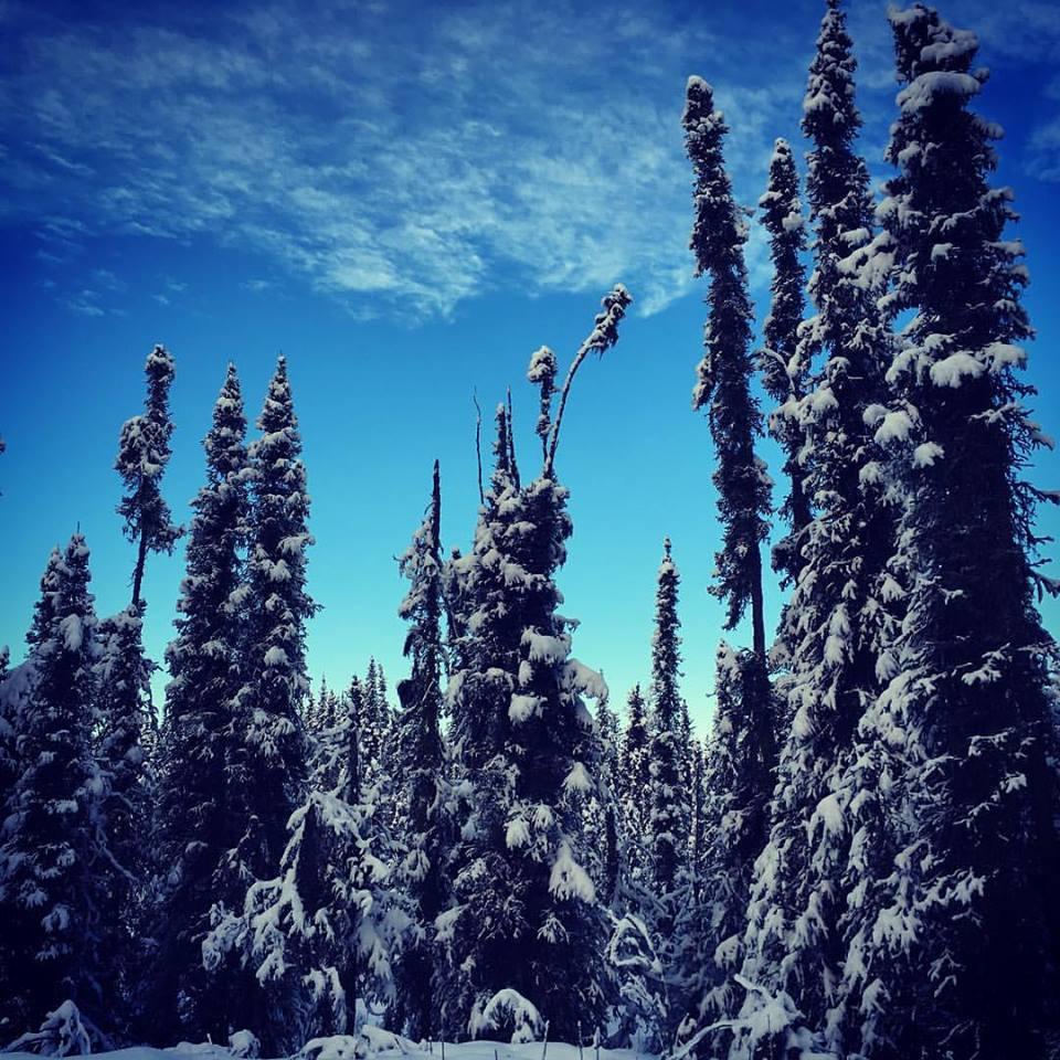 Fresh snow at Tsalteshi Trails in Soldotna, Alaska