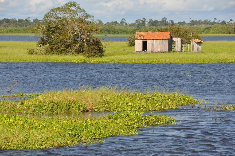 Várzea do Baixo Amazonas