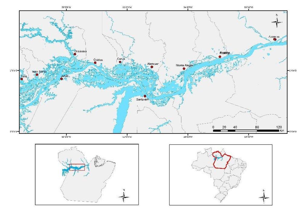 A várzea amazônica, estado do Pará, Brasil