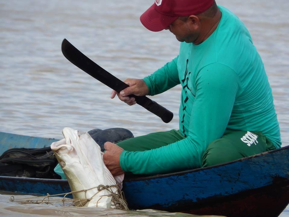 Pesca3 Pixuna do Tapará Arquivo SAPOPEMA.jpg