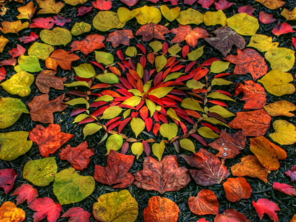 Natural artwork by Andy Goldsworthy -