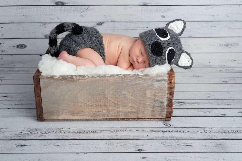 newborn mouse photo.jpg