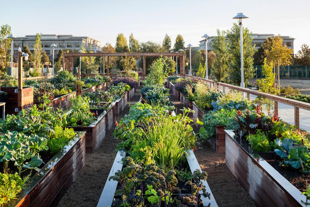 Community Garden Homestead Design Collective