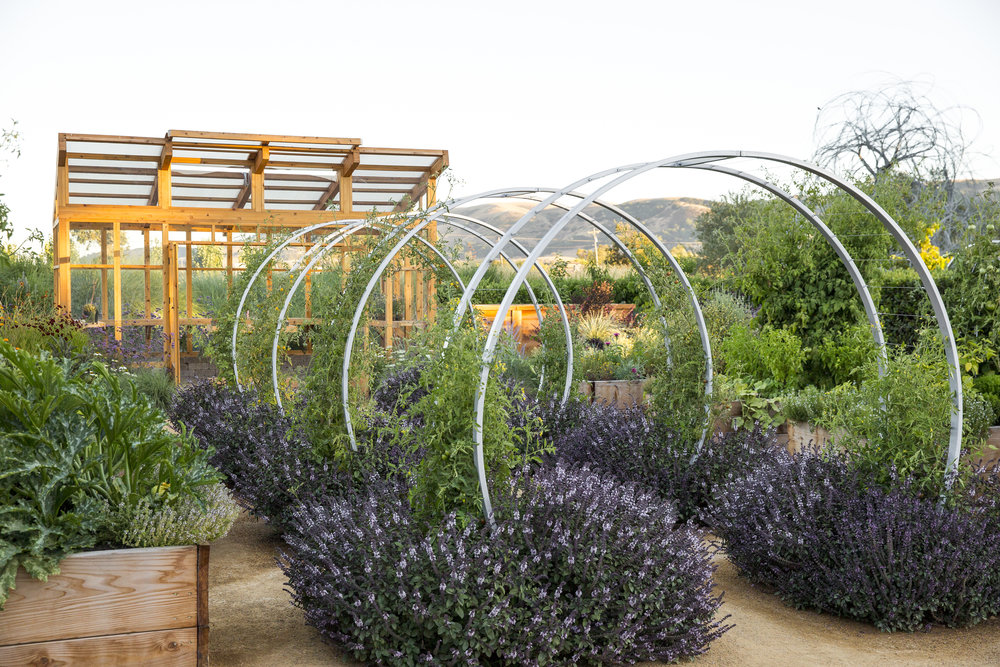 Homestead Design Collective: Edible Landscaping Design, Install, And  Maintenance In The Bay Area