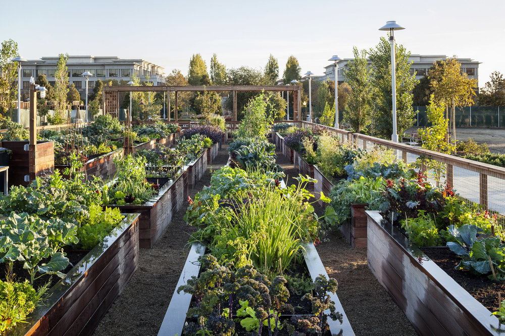 Homesteads Community Garden Project Featured In California Home