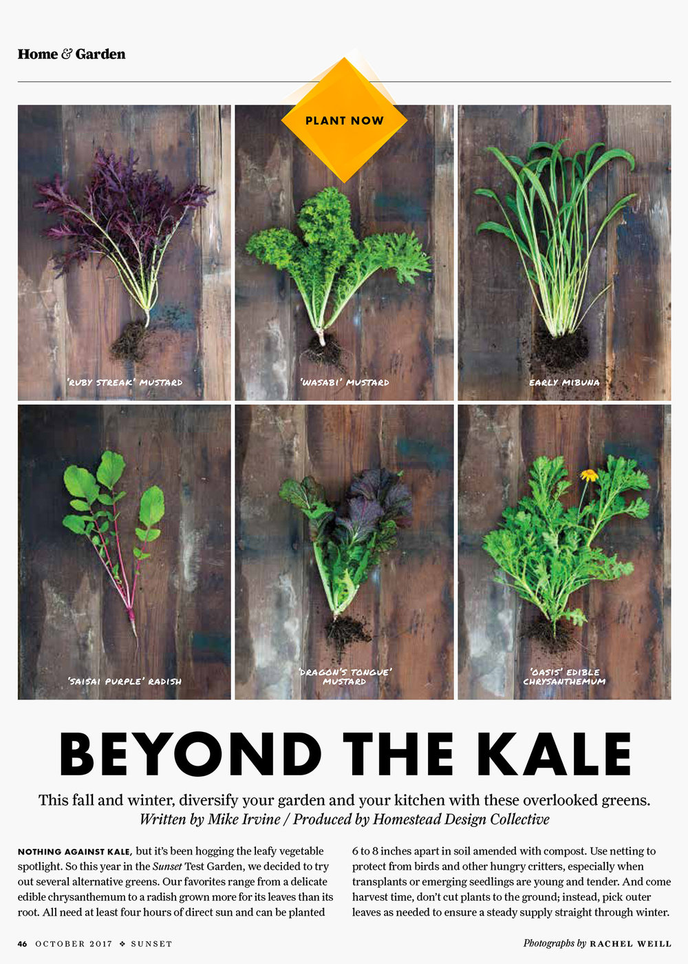 #1- Beyond the Kale-1.jpg