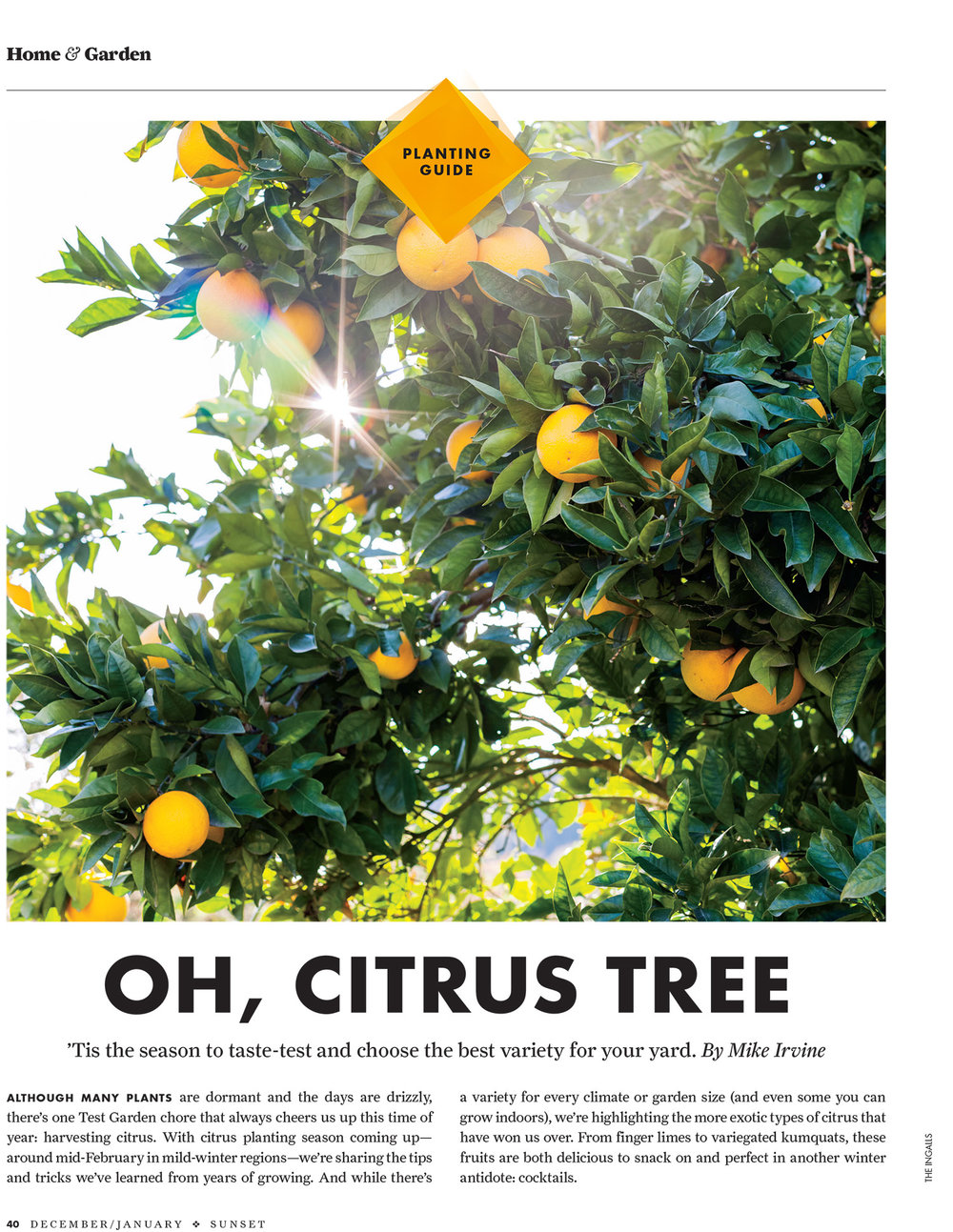 Citrus-1.jpg