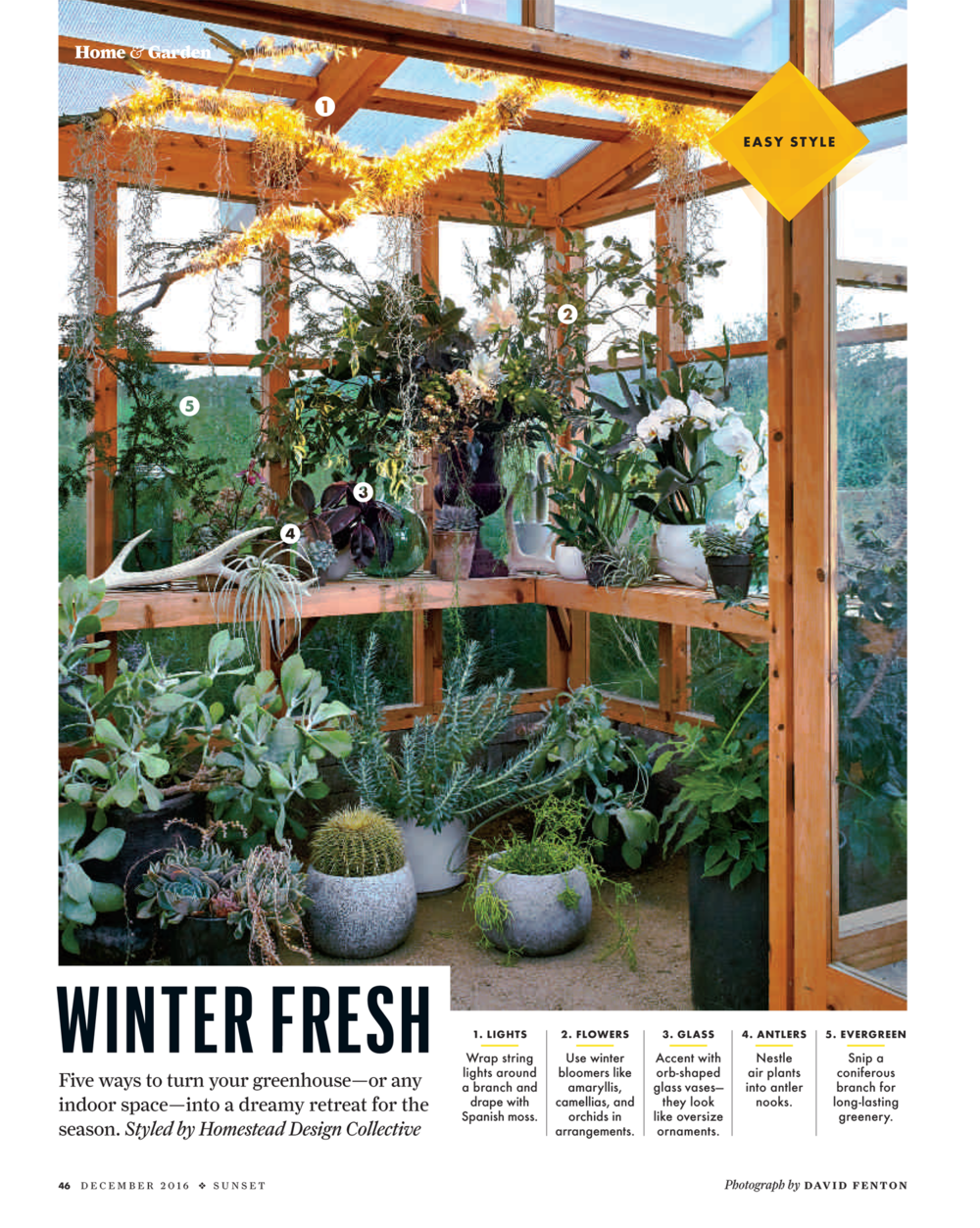 The greenhouse collective - Homestead Takes A Fresh Approach To Transforming Indoor Spaces This Winter