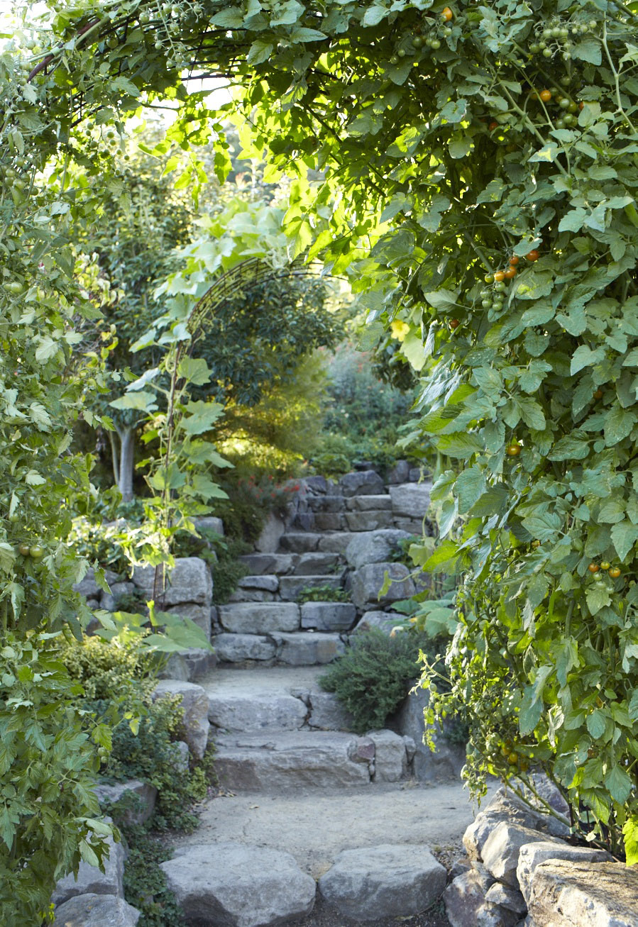 Bittner_SeptIMG_3146steps tomato trellis pear tree copy.jpg