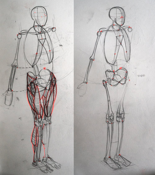 Anatomie Studien 1 — lemonfishvisuals