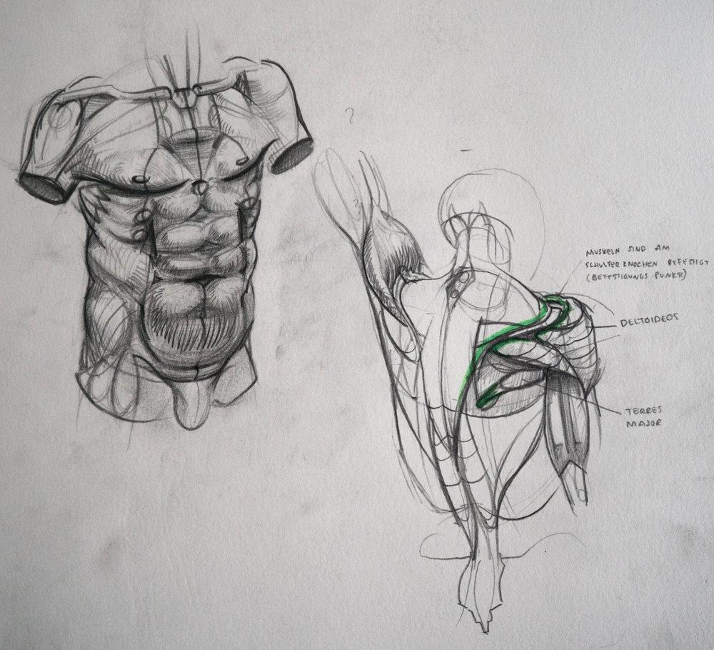 Fantastisch Menschliche Anatomie Studie Bilder - Anatomie Ideen ...