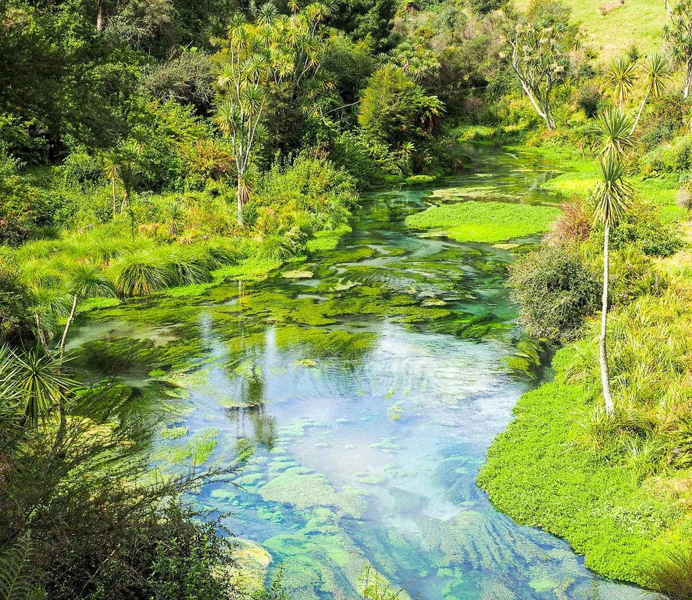 Waihou Stream, The Blue Spring