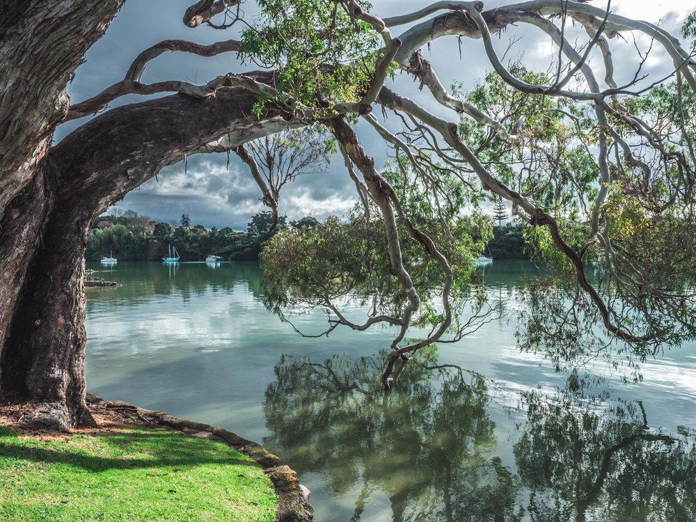 Waitui reserve, Te Puna, Tauranga. P7287127