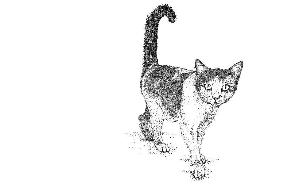 Katze_1500x900.jpg